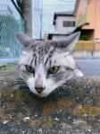 Cats & Wheelstops8