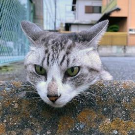 Cats & Wheelstops 8