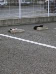 Cats & Wheelstops9