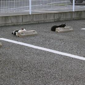 Cats & Wheelstops 9