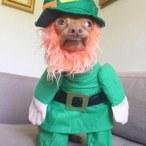 St. Patrick's Day Fail 1