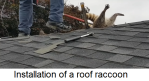 Roof Raccoon Installation