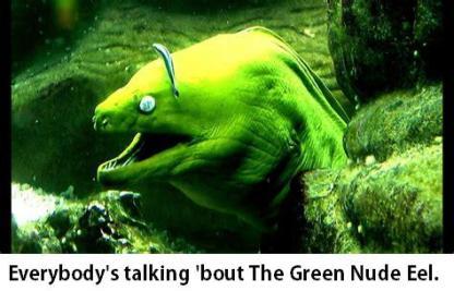Green Nude Eel